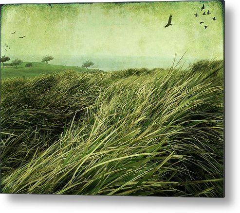 Birds Metal Print featuring the digital art Windy Day On The Nut by Margaret Hormann Bfa
