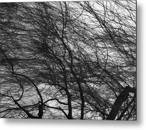 Landscape Metal Print featuring the photograph Winter Tree Branches by Bobby Miranda