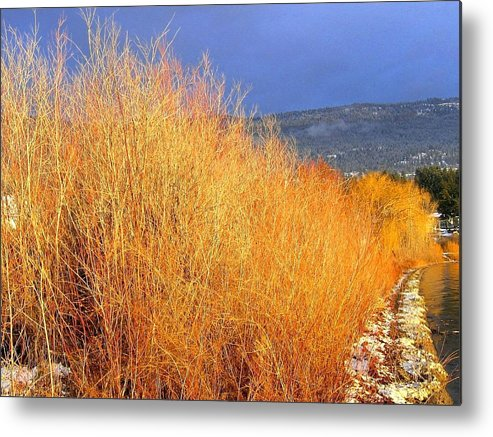 Willows Metal Print featuring the photograph Winter Willows by Will Borden