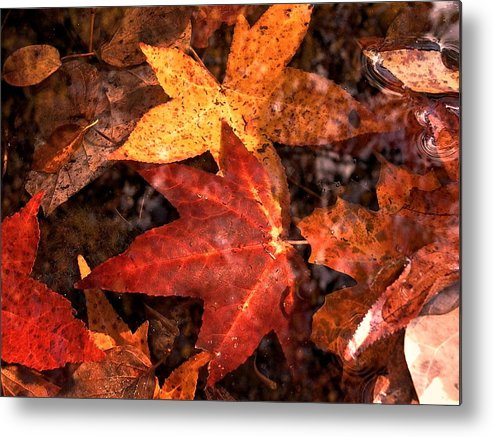 Leaves Metal Print featuring the photograph With Love - Autumn Pond by Theresa Asher