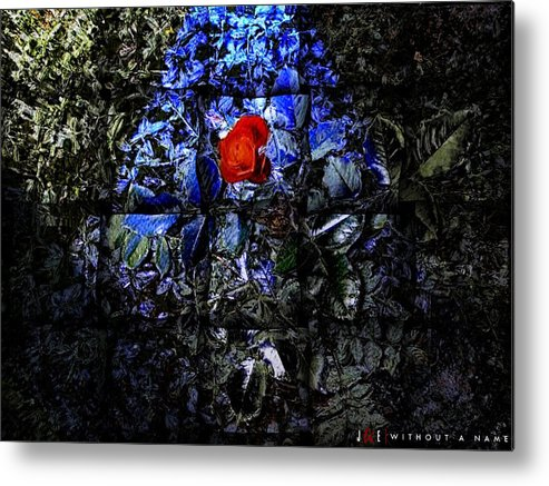 Rose Metal Print featuring the photograph Without A Name by Jonathan Ellis Keys