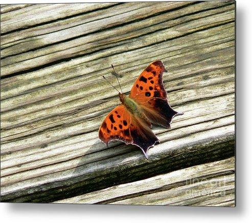 Butterfly Metal Print featuring the photograph Wood Stop by Joy Tudor