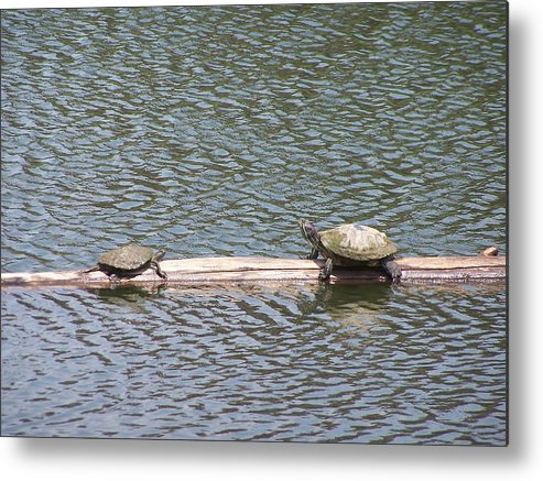 Turtles Metal Print featuring the photograph Wrong Way by Vijay Sharon Govender