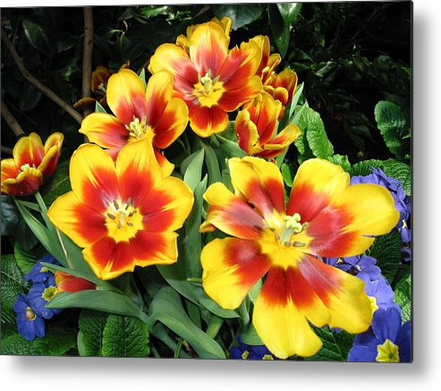 Floral Metal Print featuring the photograph Yellow And Red Flowers by Gene Sizemore