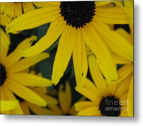 Yellow Metal Print featuring the photograph Yellow Bunch II by Robert Wilson