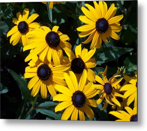 Yellow Flowers Metal Print featuring the photograph Yellow Daisies by Ellen B Pate