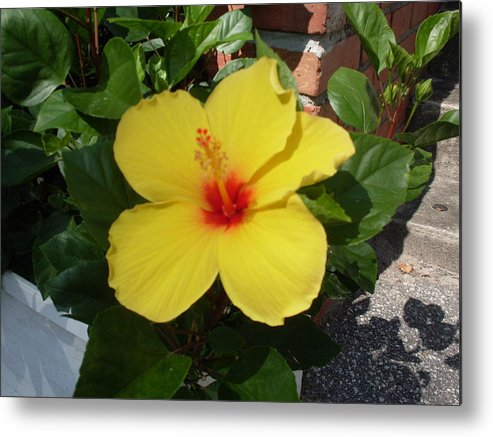 Flower Metal Print featuring the photograph Yellow Hibiscus Shadows by Warren Thompson