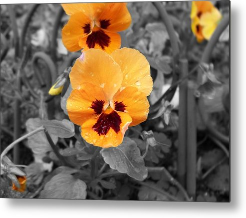 Flower Metal Print featuring the photograph Yellow by Jessica Burgett