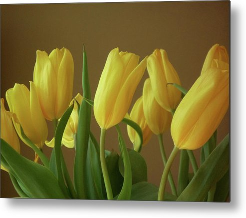 Metal Print featuring the photograph Yellow My Favorite Tulips by Tori Yule