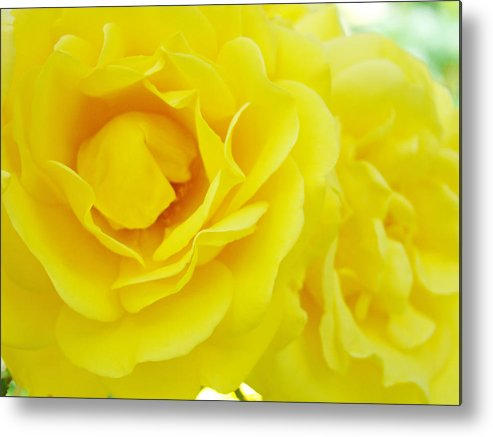 Rose Metal Print featuring the photograph Yellow Roses Art Prints Botanical Giclee Prints Baslee Troutman by Baslee Troutman