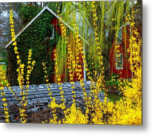 Yellow Flowers Metal Print featuring the photograph Yellow Weeds by Michael L Kimble
