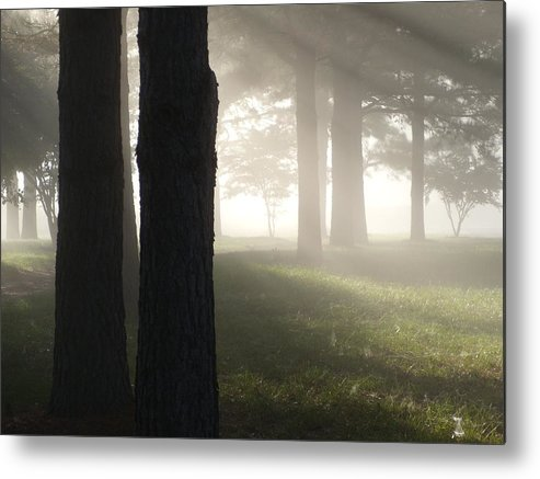 Woods Metal Print featuring the photograph York River State Park Rd Foggy Woods Ll by Jim Newman