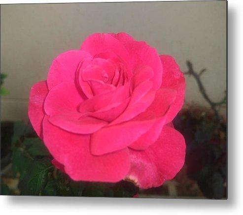 Metal Print featuring the photograph Pink Rose by Nimu Bajaj and Seema Devjani