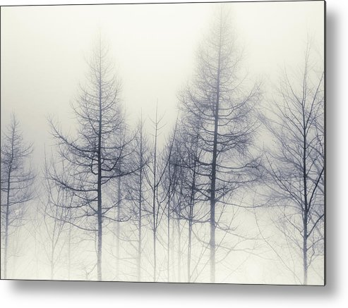 Tranquility Metal Print featuring the photograph Abstract Trees In Winter by Inhiu All Rights Reserved