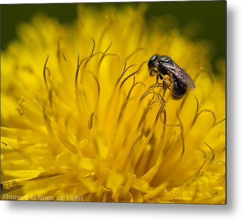 Bee Metal Print featuring the photograph Bee Pollen by Elaines Echoes of Light