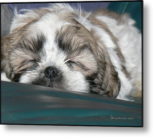 Bubba Metal Print featuring the photograph Bubba by Ericamaxine Price