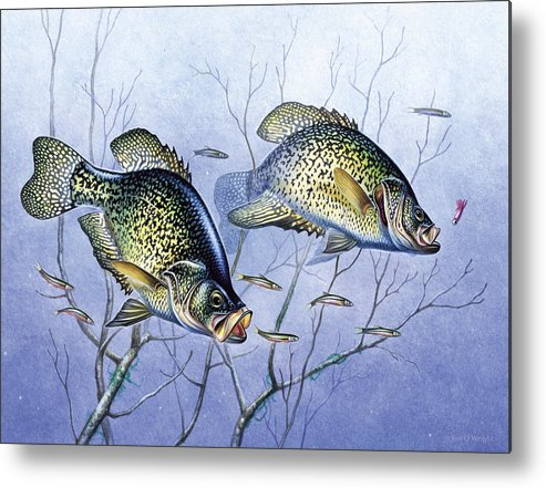 Jon Q Wright Metal Print featuring the painting Crappie Brush Pile by JQ Licensing