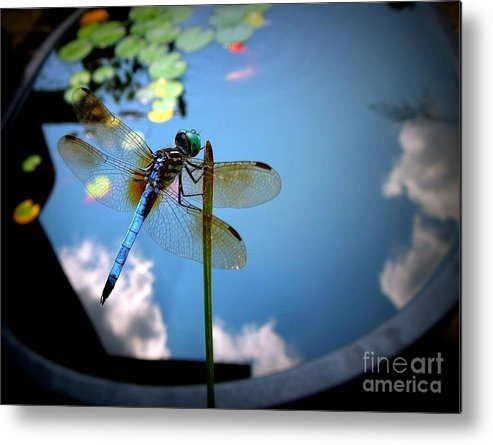 Dragonfly Metal Print featuring the photograph Dragonfly Reflecting On A Beautiful Day by Renee Trenholm