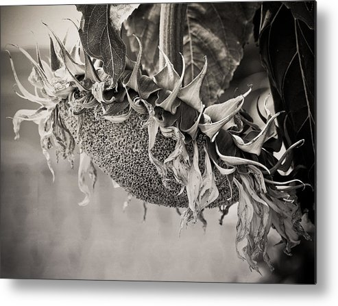 Landscape Metal Print featuring the photograph End Of Season by Virginia Folkman