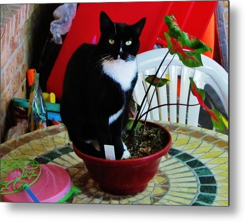 Cats Metal Print featuring the photograph Flowerpot Cat by Thomas McGuire