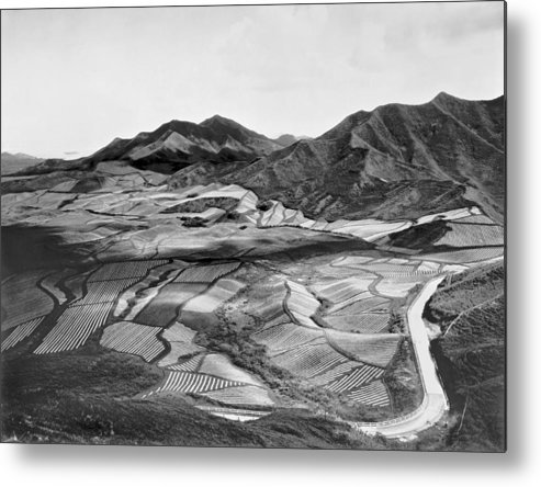 1923 Metal Print featuring the photograph Hawaiian Pineapple Plantation by Underwood Archives