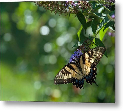Butterfly Metal Print featuring the photograph In The Garden II by Mary OMalley