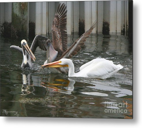 Pelicans Metal Print featuring the photograph Let Me Help You With That Burden. by Mariarosa Rockefeller