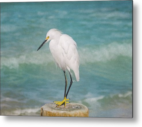 Egret Metal Print featuring the photograph One With Nature - Snowy Egret by Kim Hojnacki