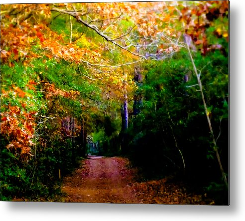 Paths Metal Print featuring the photograph Paths We Choose by Karen Wiles