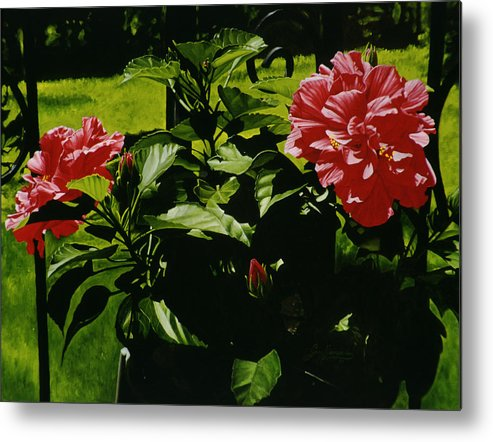 Floral Metal Print featuring the painting Red Hibiscus by Gary Hernandez