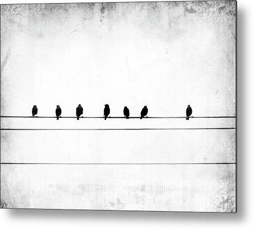 Birds Metal Print featuring the photograph Sheet Music by Jeffrey Hummel