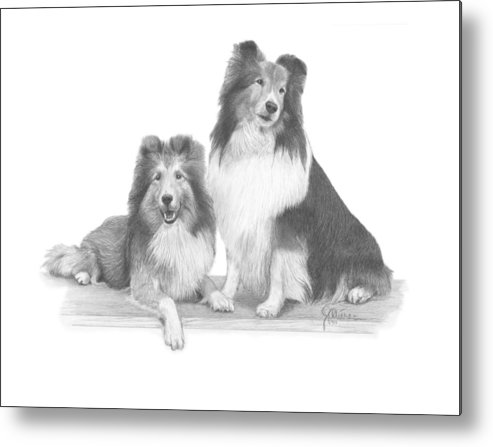 Pencil Drawing Print Metal Print featuring the drawing Shelties by Joe Olivares