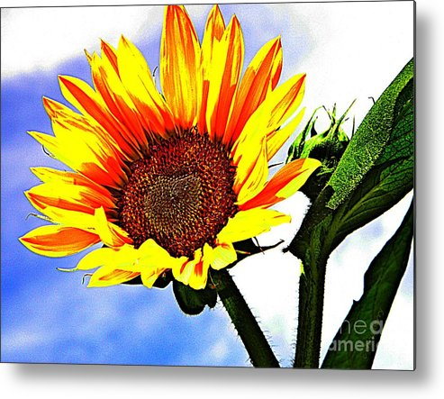 Wildflowers Metal Print featuring the photograph Sunflower  by Chris Berry