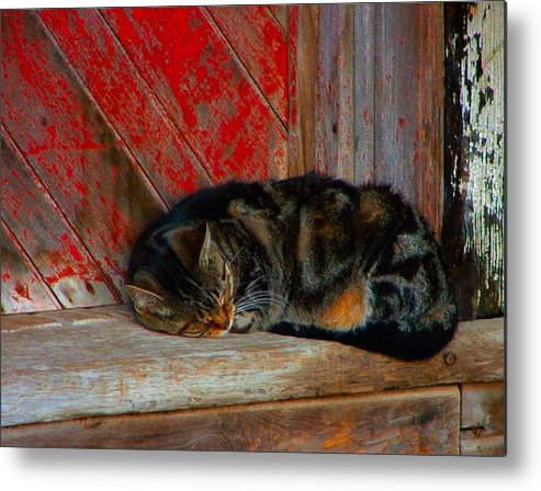 Cats Metal Print featuring the photograph The Old Mill Cat by Julie Dant