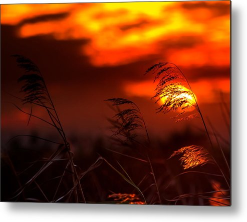 Sunset Metal Print featuring the photograph Whispering Sunset by Mark Andrew Thomas