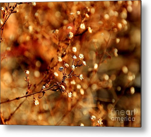 Plants Metal Print featuring the photograph Babys Breath by Lennie Malvone