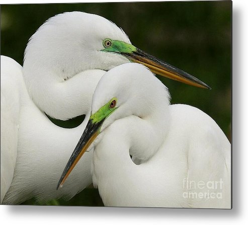 Birds Metal Print featuring the photograph Colorful Couple by Myrna Bradshaw