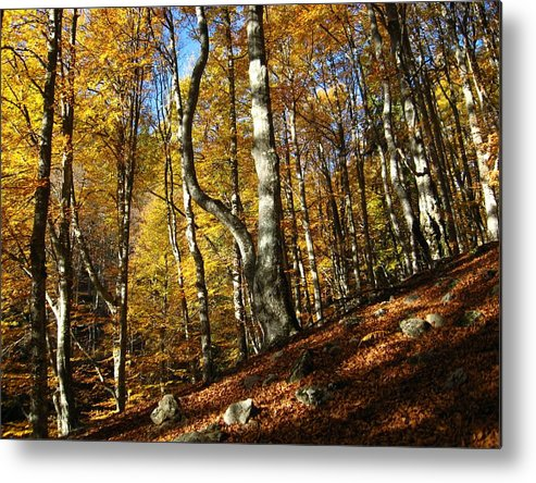 Fall Colors Metal Print featuring the photograph Forest Fall Colors 4 by Alina Cristina Frent