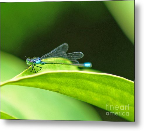 Dragonfly Metal Print featuring the photograph Little Dragonfly by Randy Harris
