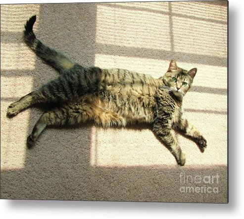Cat Metal Print featuring the photograph Lying In The Sunlight by Michelle Powell