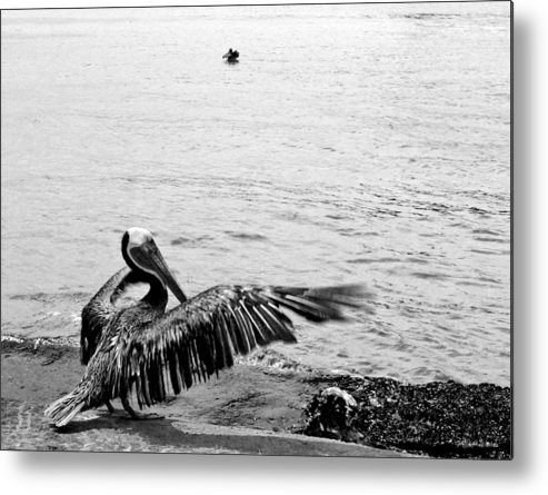 Bird Metal Print featuring the photograph The Conductor by Michelle Constantine