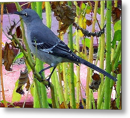 Digital Metal Print featuring the photograph The Mockingbird by Nina Fosdick