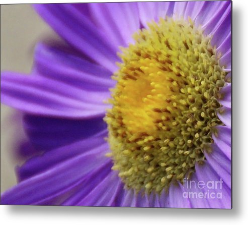 Flower Metal Print featuring the photograph Springtime by Linda Shafer