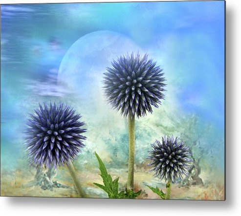 Thistle Metal Print featuring the photograph Avantgarde by Manfred Lutzius