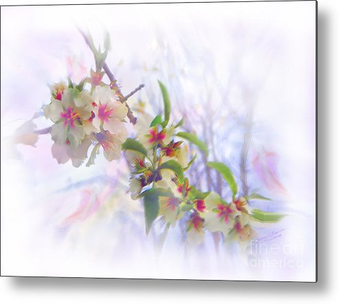 Blossoms Metal Print featuring the painting Almond Blossoms by Glenyss Bourne