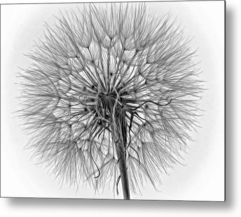 Weed Metal Print featuring the photograph Anatomy Of A Weed Monochrome by Steve Harrington