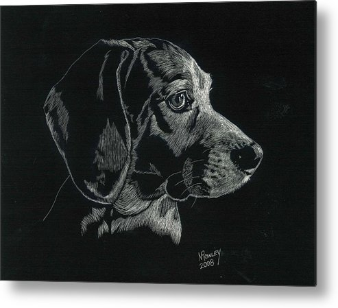 Scratchboard Metal Print featuring the drawing Archie by Norma Rowley