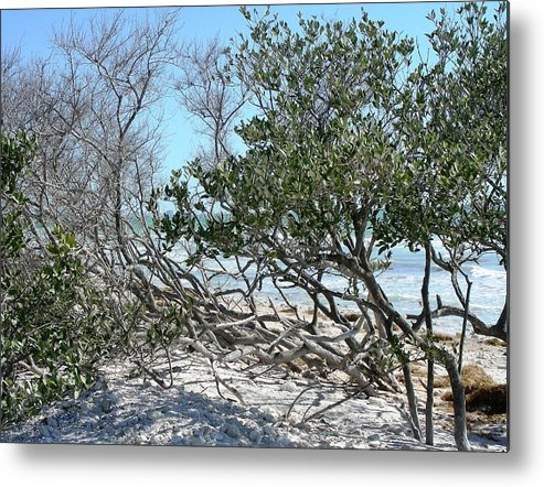 Landscape Metal Print featuring the photograph Beach Brush by Peter McIntosh