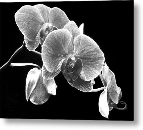 Flowers Metal Print featuring the photograph Black And White Orchid by Larry Federman