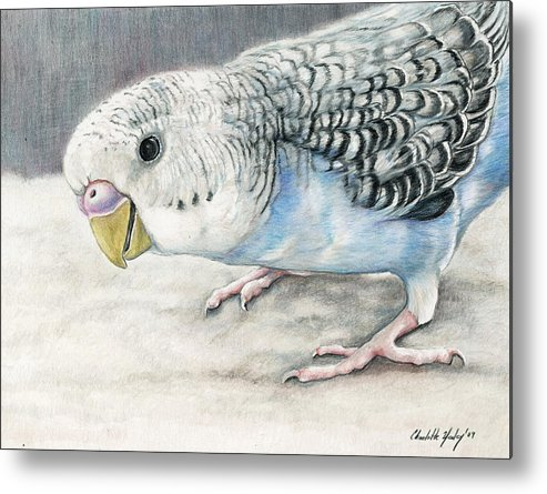 Bird Metal Print featuring the painting Blue Budgie by Charlotte Yealey